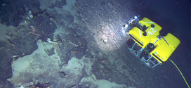 """Yet another unknown """"carbon sink"""" revealed"""
